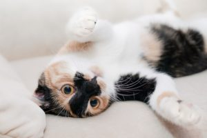 Liver disease in dogs and cats