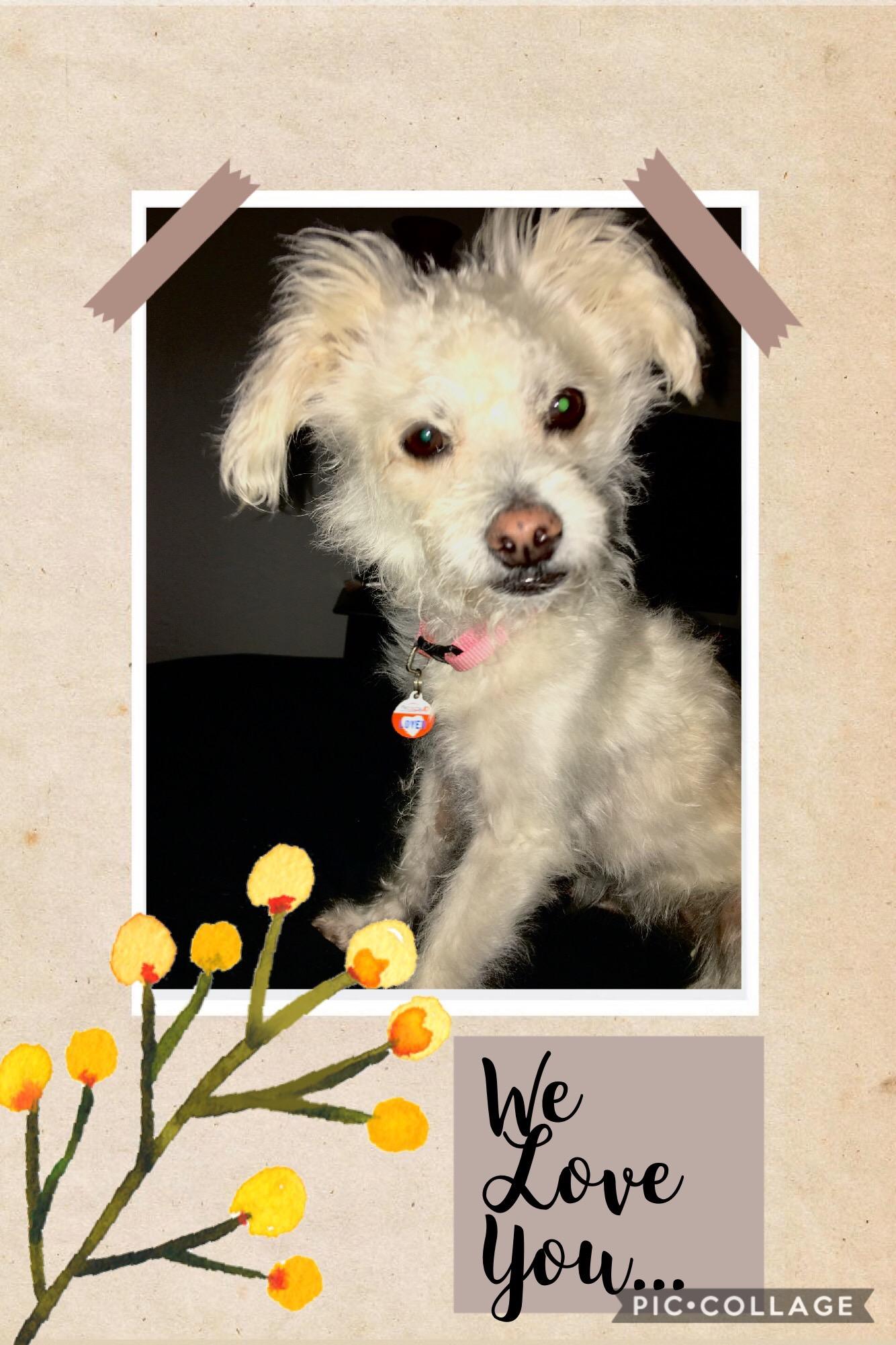 Lucy dog cancer 2018 NHV tumor free cutest dog