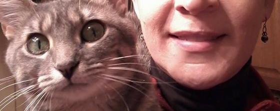 Stella cat with FeLV NHV remedy Felimm