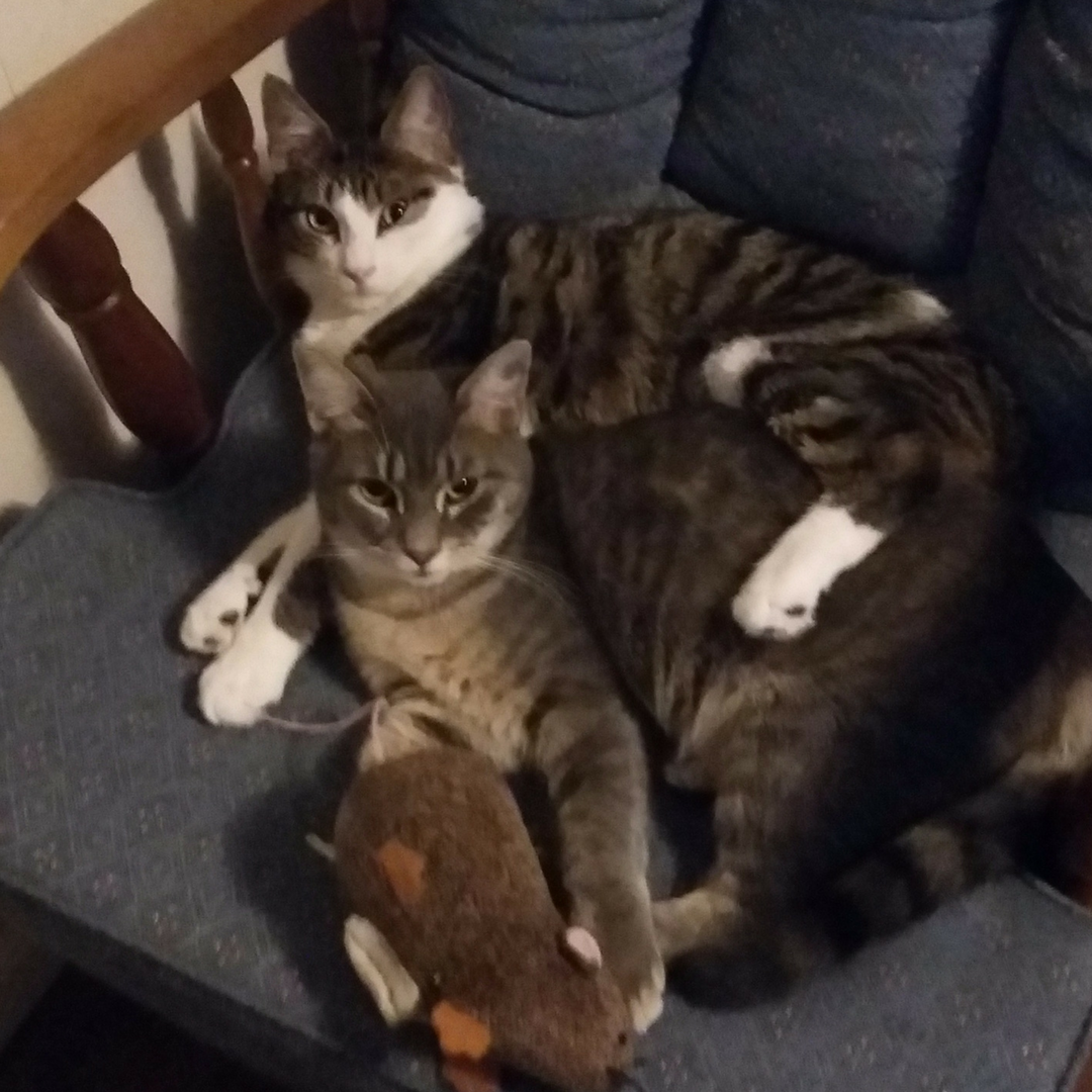 FeLV cats cuddled up on a chair