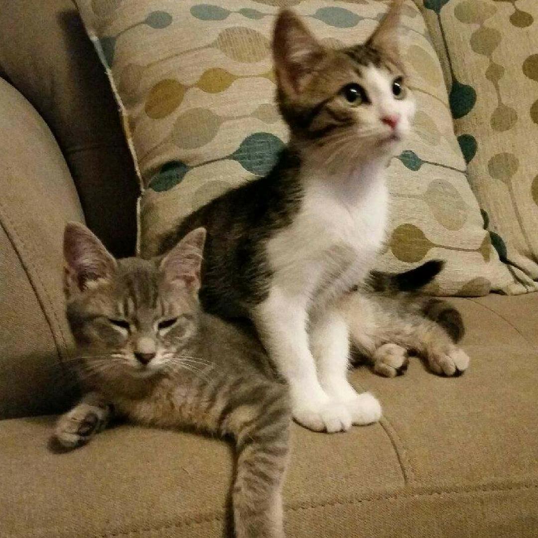 Adopting Felv Positive Cat