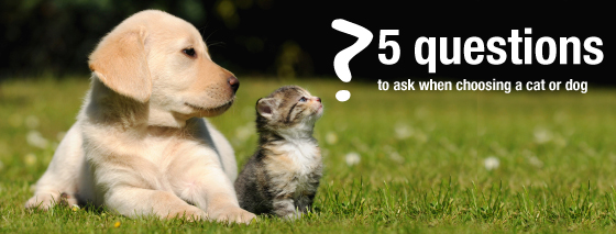Questions To Ask When Choosing Cat or Dog