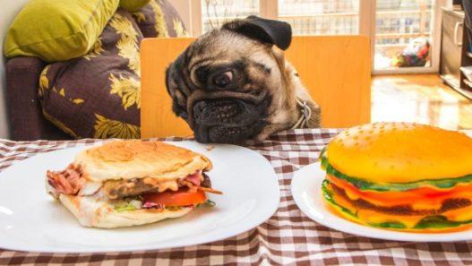 Concerned Pet Care Awareness