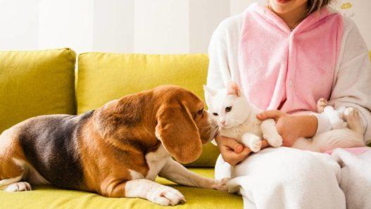 Vet Talks: Pain Awareness in Pets