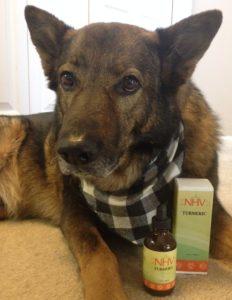 German shepherd dog uses turmeric