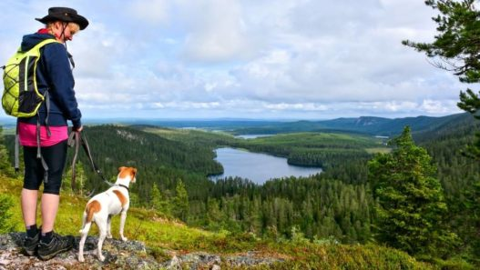 10 Essential Tips For Hiking With Dogs