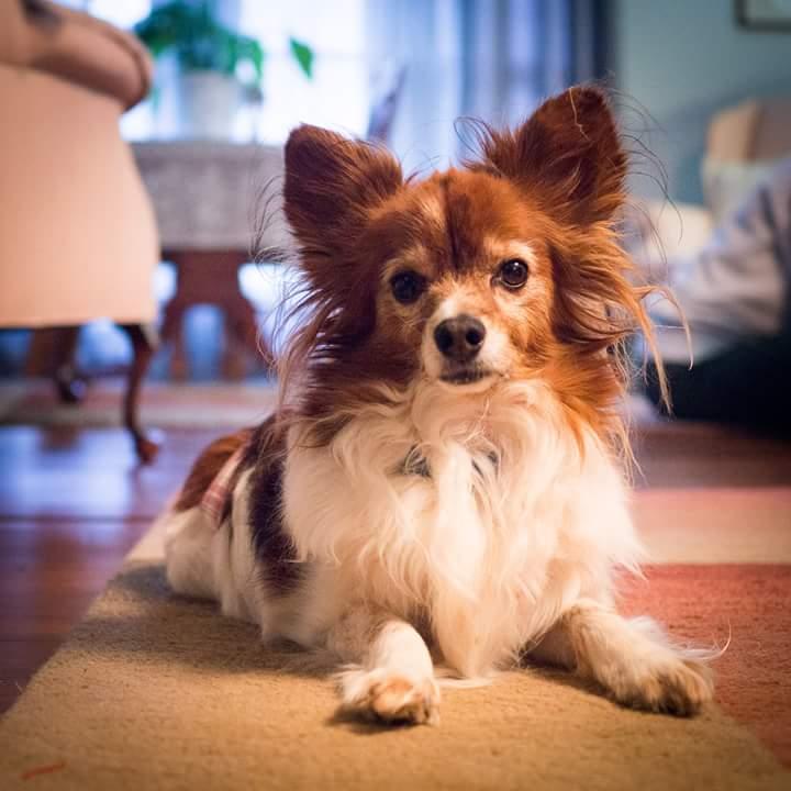 Obby dog seizures milk thistle NHV