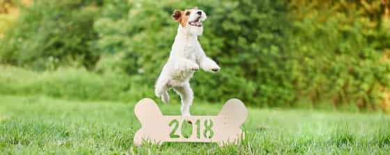 Dog cat new year resolutions