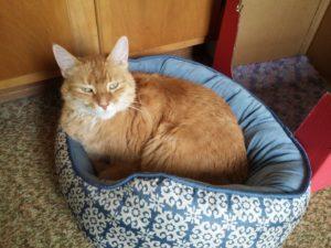 Sammy the cat - PU surgery
