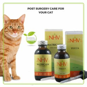 post surgery care for cats herbal supplements from NHV - Yucca and Matricalm
