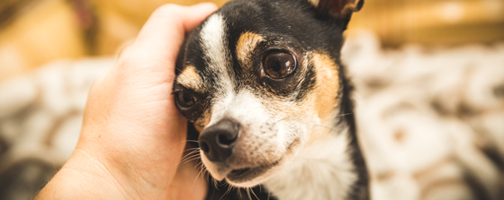 Post surgical care for pets
