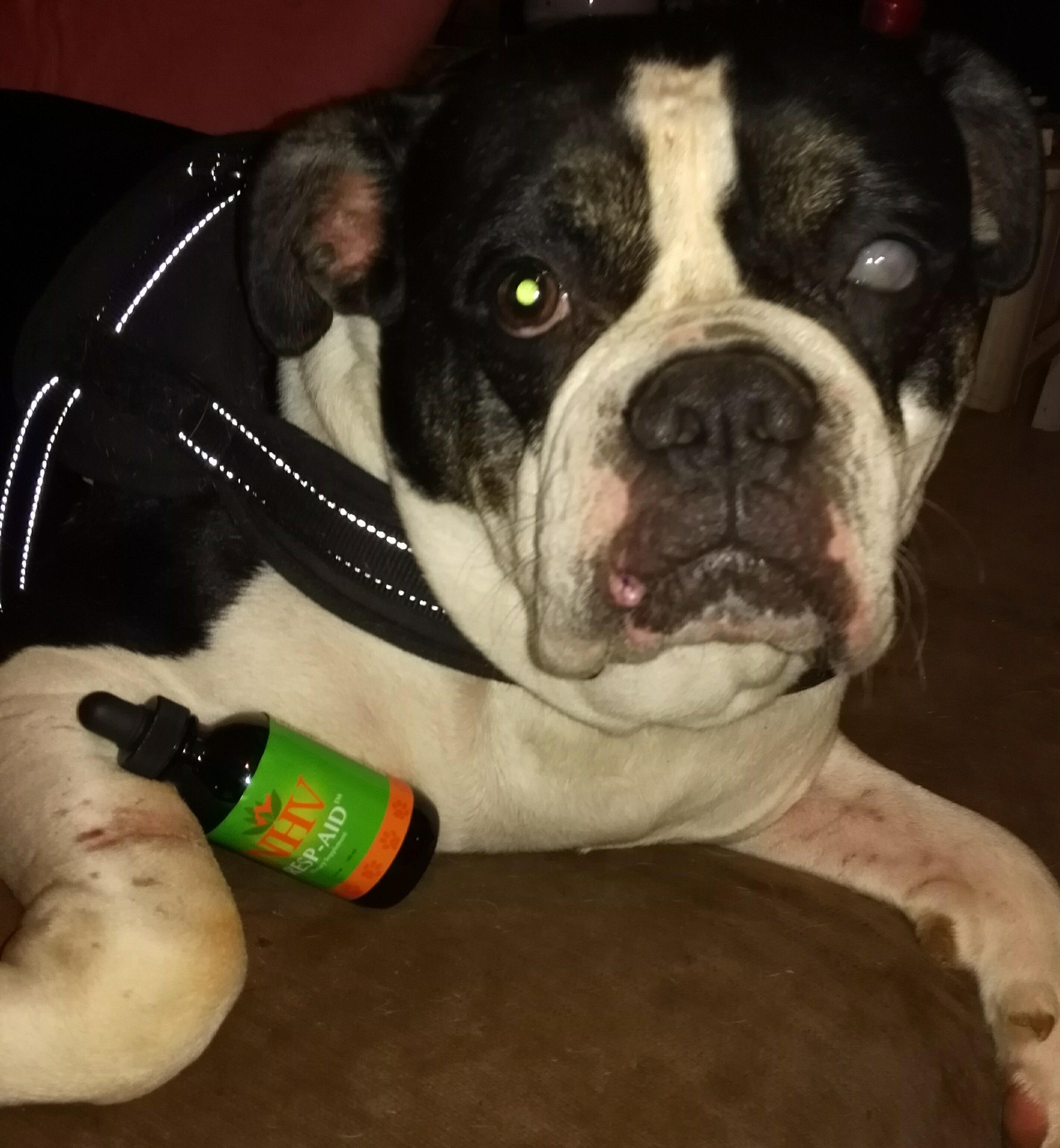 NHV Resp aid pitbull