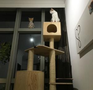Peanut the cat sitting on top of teh cat tree