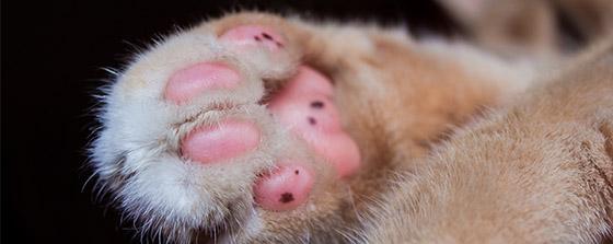 ingrown nails in pets