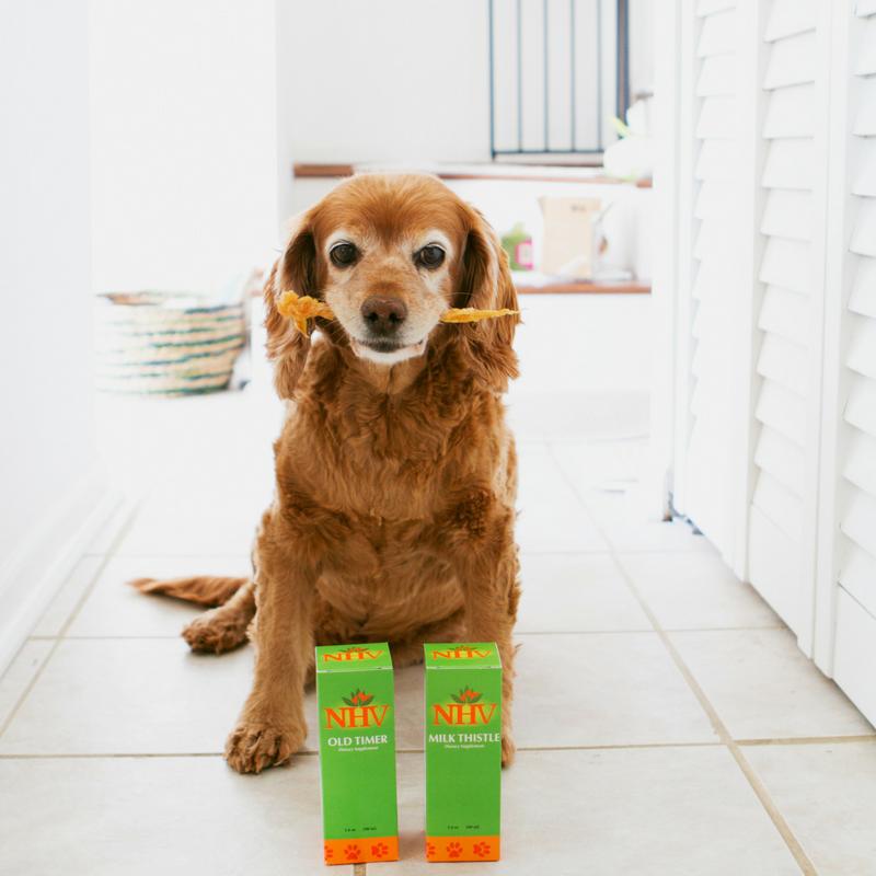 caring for senior pets NHV natural supplments - dog Vino