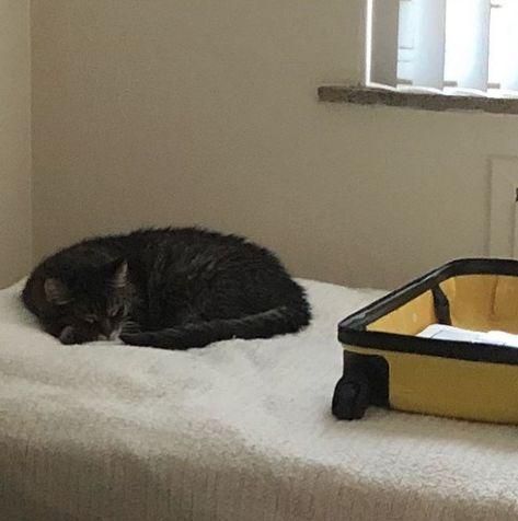 bobby cat diabetes