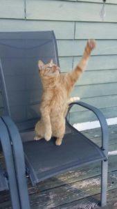 orange cat playing bobbob