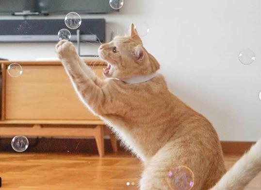 caramel-cat-joints-catchingbubbles