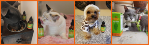 NHV Natural pet products with pets