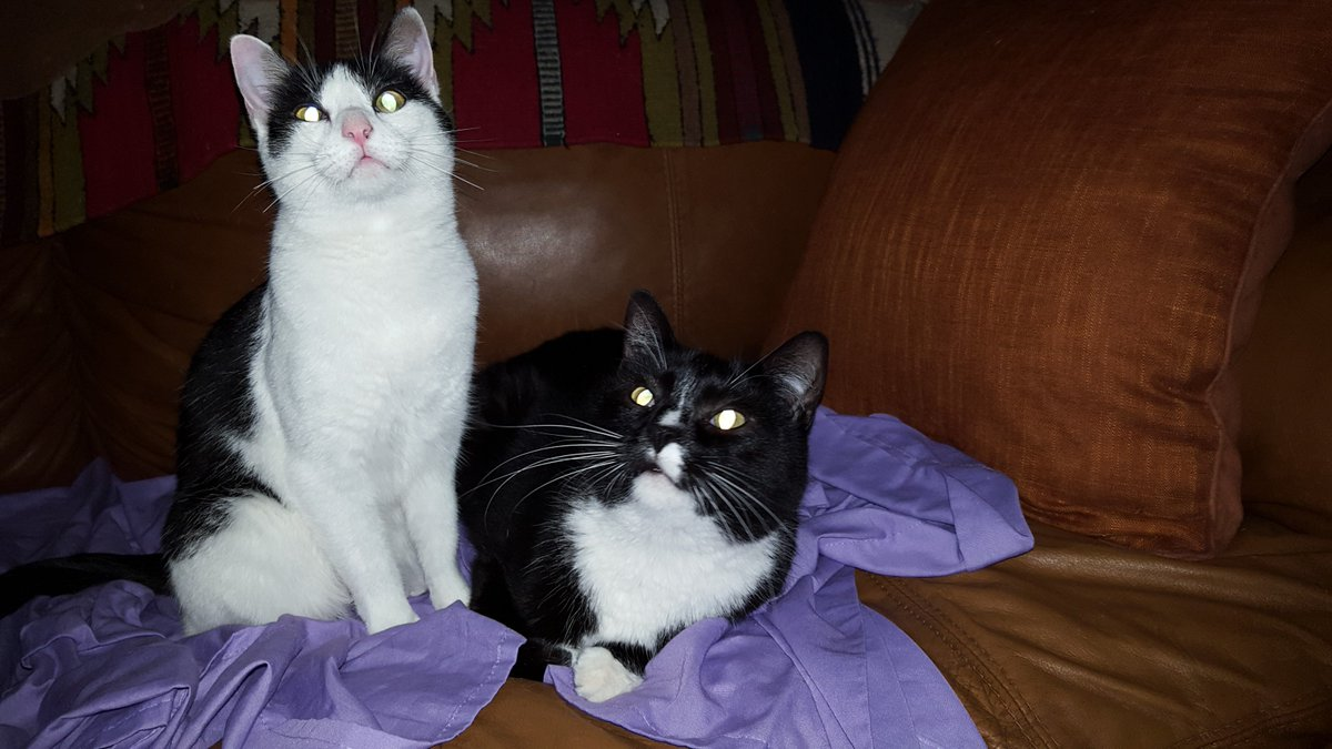 herbie with other cat