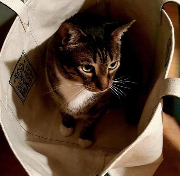 teagan cat in a bag
