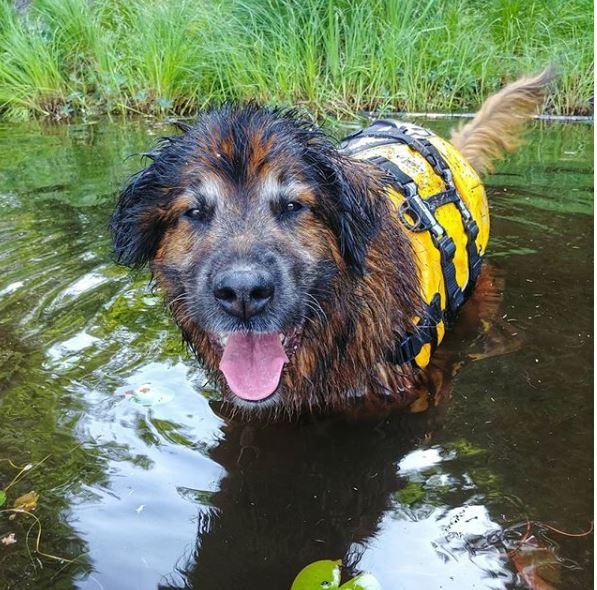 daisy-cushings-dog-water
