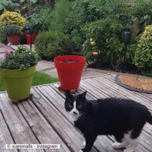 suesmalls IG cat - Chibi - allergies in cats
