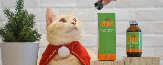 Caramel cat how to help senior pets with arthritis
