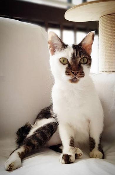 Oreo-cat-singapore-1