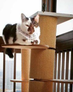 Oreo-cat-singapore-2