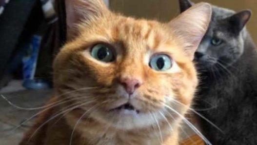 managing chronic diarrhea in cats