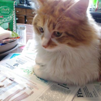 cat sitting on newspaper