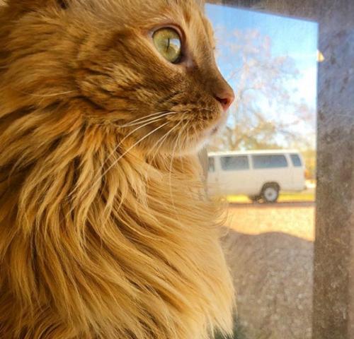jeffrey-hairballs-hairB EZ-NHV-multi-essentials-Cat-Lion cut-matricalm-lion