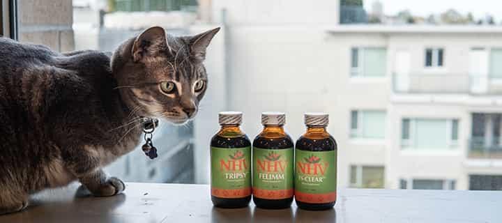 NHV Lymphoma kit for cats