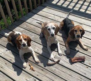 Dixie, Sadie & Toby are the goodest doggos!