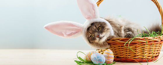 cat wearing rabbit ears while sitting in a wicker basket next to pastel painted eggs