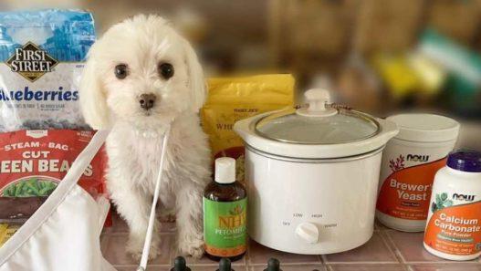 daisys-diet-personalized-pet-nutrition-plan