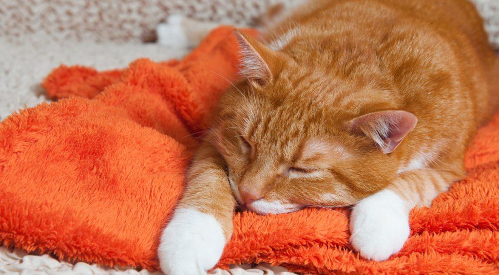 orange cat sleeping on orange fleece