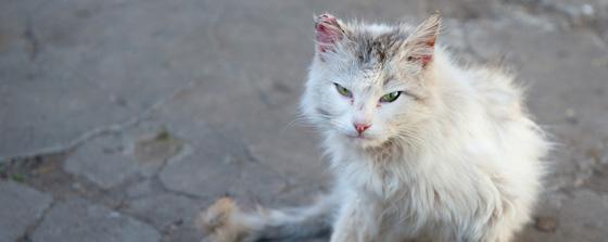 FIV kitty