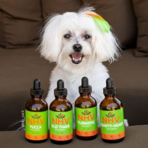 The-PBJ-Pack-Story-dogs-nhvpets