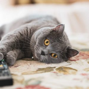 how-to-choose-a-pet-sitter-cat-on-couch