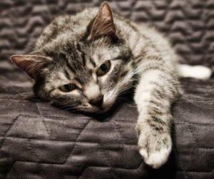 vet-talks-how-to-recognize-animal-pain-eye-cat-in-pain