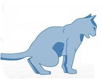 cat-pain-during-urination
