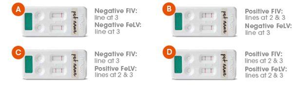 Different feline leukemia test results