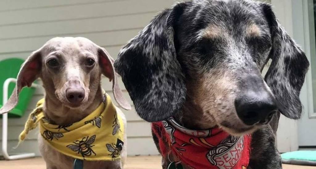 epilepsy in dogs